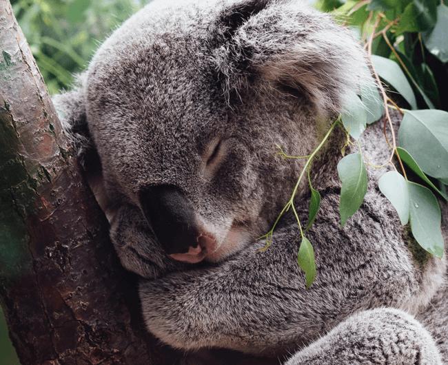 Artículo Koala CRM