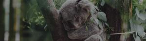 S4G consultoría Salesforce cabecera koala